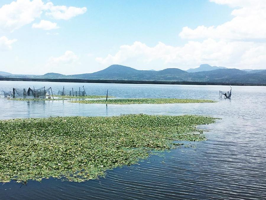 Recupera IPN el último humedal del Valle de México