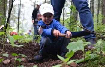 Reforestan con 15 mil árboles Santuario de la Mariposa Monarca