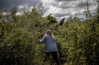 Asesinan a Zenaida Pulido, activista que buscaba desaparecidos