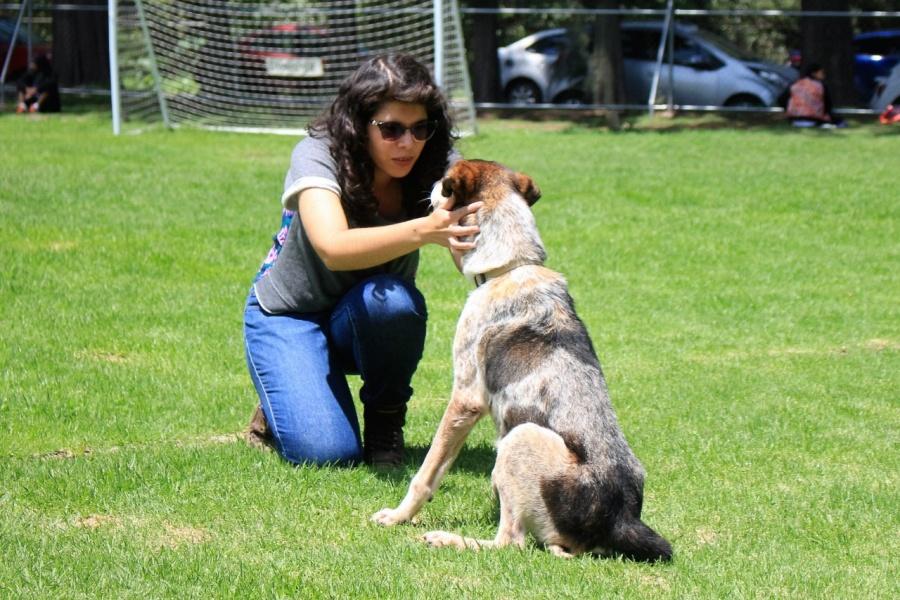 Brigada Animal exhorta a adoptar animales de compañía