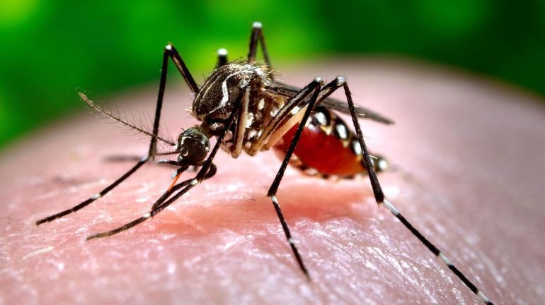 Detectan virus mortal transmitido por mosquitos en Florida