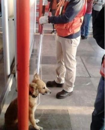 En dos años rescatan a 256 perros en el Metro