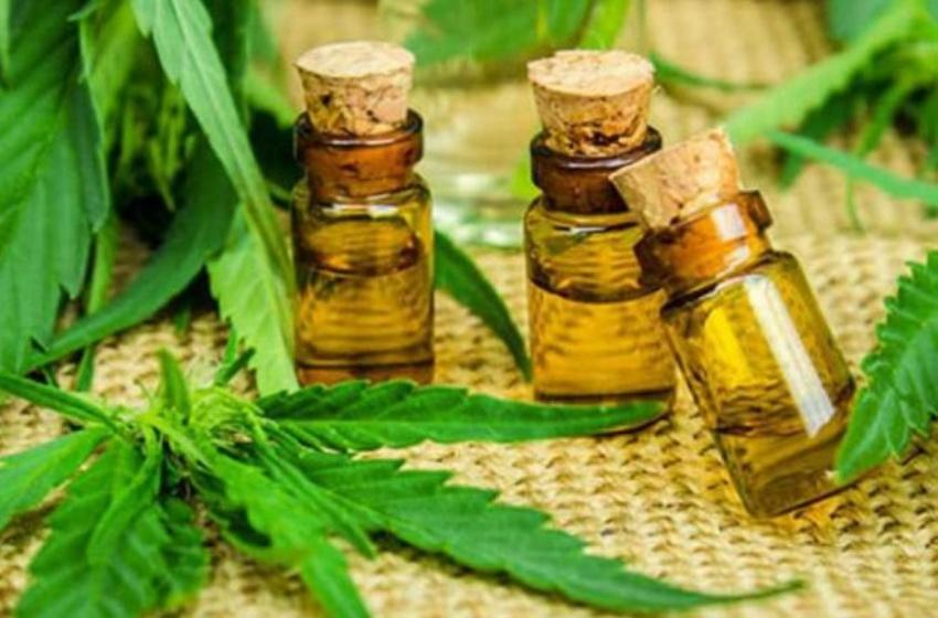 Convoca Senado a Parlamento Abierto sobre regulación de la cannabis