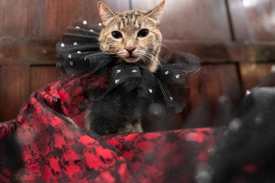 Hoy, Día Internacional del Gato