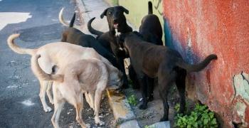 México, primer lugar de Latinoamérica con perros callejeros