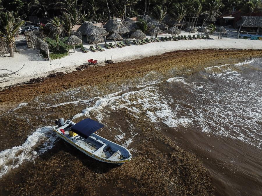 Semar descarta contaminantes en sargazo del Caribe