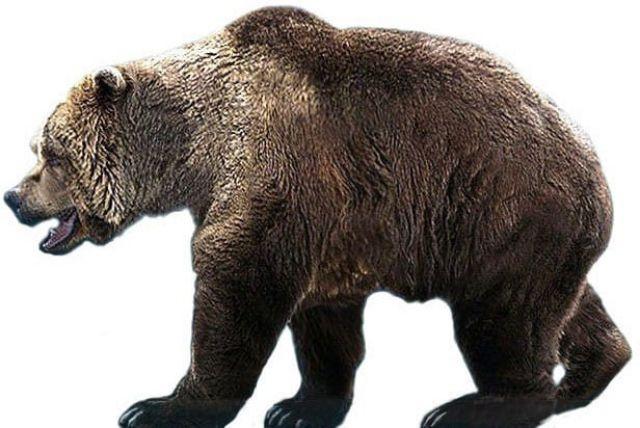 El hombre habría provocado la extinción de oso de las cavernas