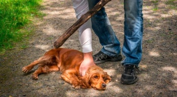 Buscan tipificar como delito el maltrato animal en todo el país