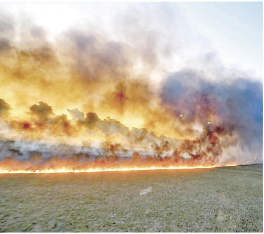 Se incendia el Amazonía y Bolsarano culpa a las ONG