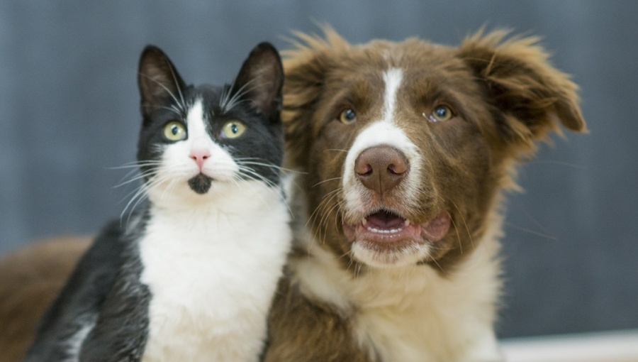 Inteligencia artificial al servicio de tu mascota
