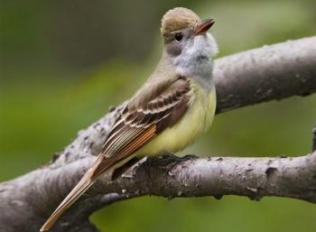 Descubren 19 especies de aves en Área Natural Protegida de la CDMX