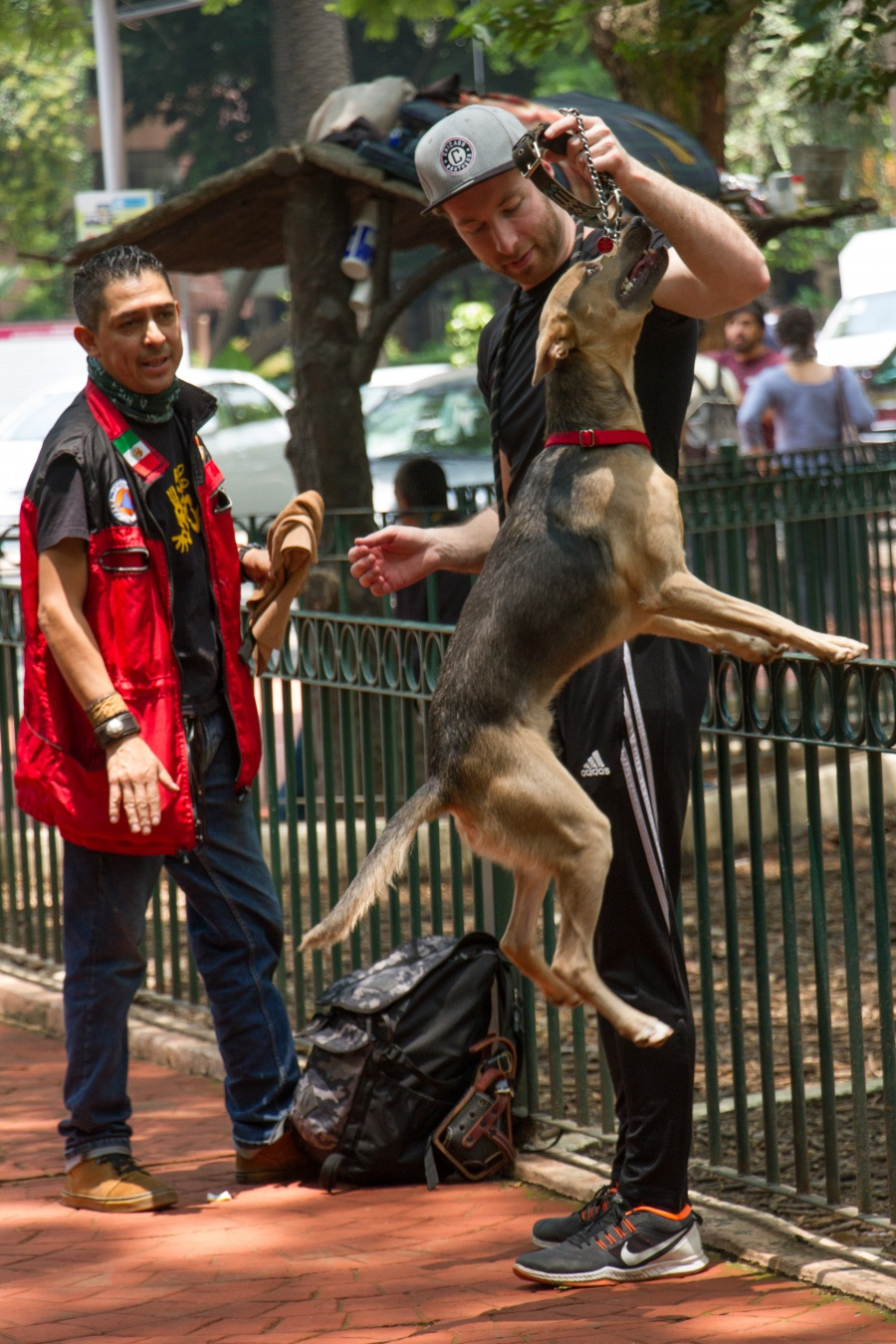 Aprueban reforma para evitar maltrato de las mascotas