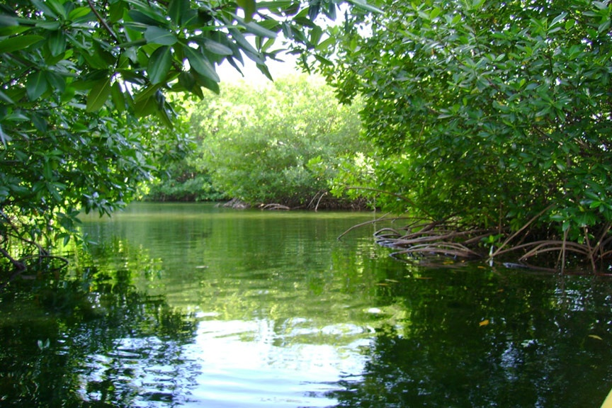 Conoce los manglares de Al Thakira en Qatar