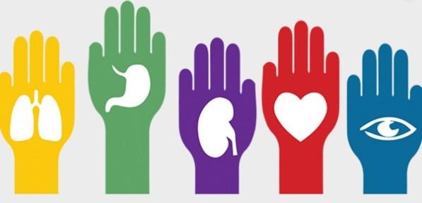 Morena plantea incentivar la donación de órganos