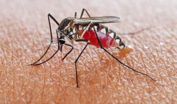 Liberan mosquitos esterilizados genéticamente en África para eliminar la malaria