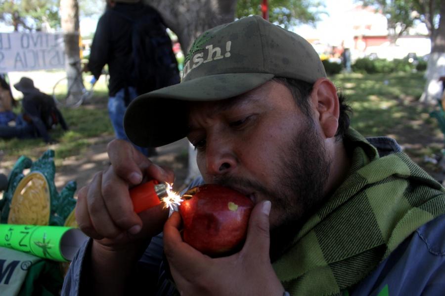 Urgen senadores reformas integrales en la legalización de la cannabis