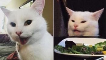 Smudge, el gato canadiense que se hizo viral en redes sociales