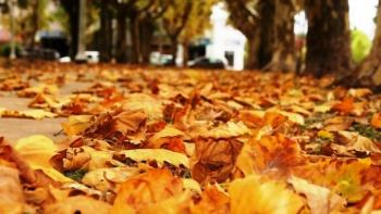 Este lunes llega el otoño con ingreso de primer frente frío