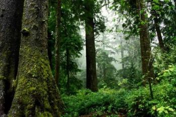 Nueva asociación protegerá a bosques