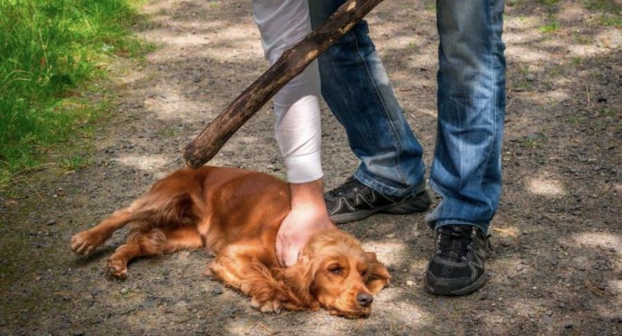 Piden hasta 9 años de cárcel para quien provoque muerte de animales
