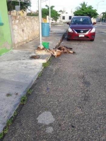 Aumenta el envenenamiento de animales en Mérida