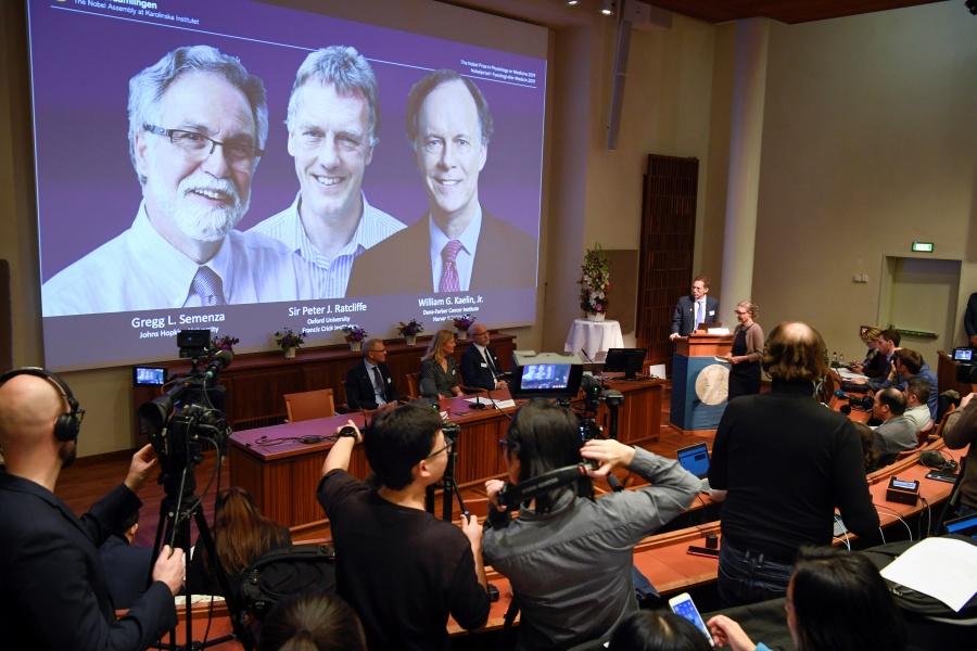 Nobel de Medicina para investigación sobre adaptación de células a niveles de oxígeno
