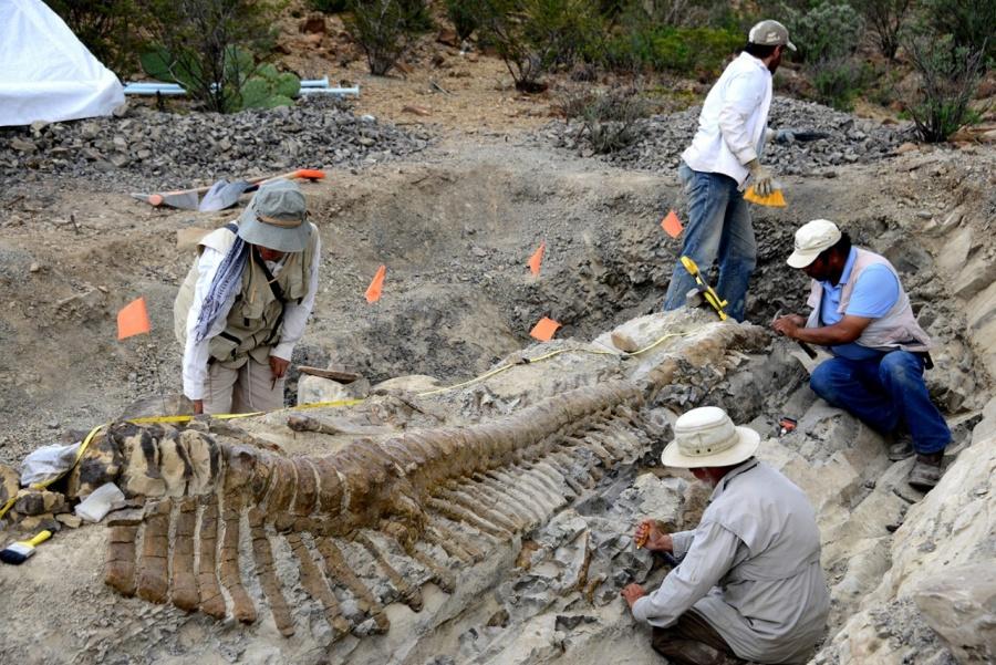 Estrena INAH micrositio sobre paleontología