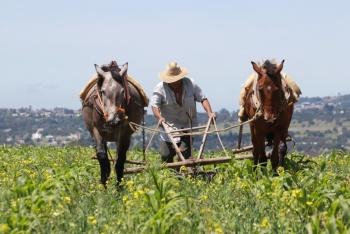 Reporta agricultura avance del 96 por ciento de su presupuesto