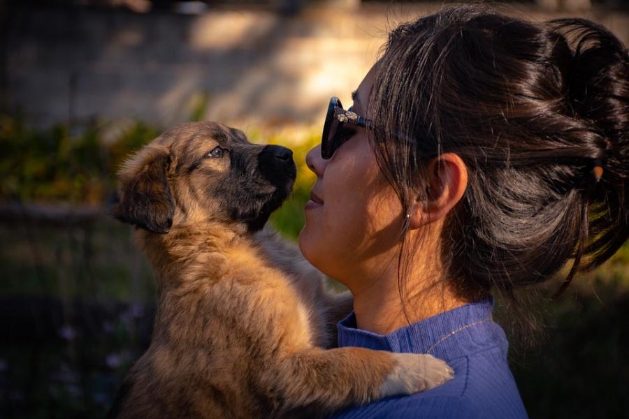 En Italia otorgan permiso laboral a mujer para cuidar a su mascota