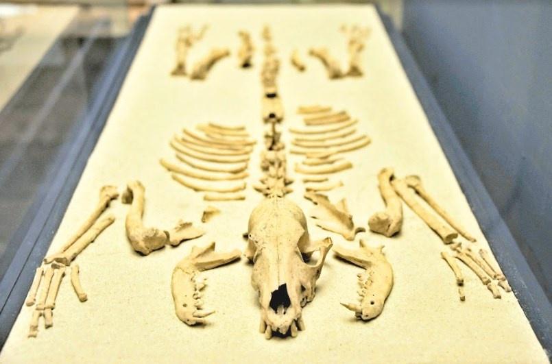 Rompen mitos acerca del xoloitzcuintle
