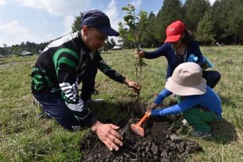 Científicos ponen en duda que reforestación sea el remedio ante el cambio climático