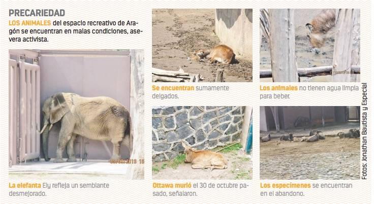 Denuncian abandono en Zoológico de Aragón