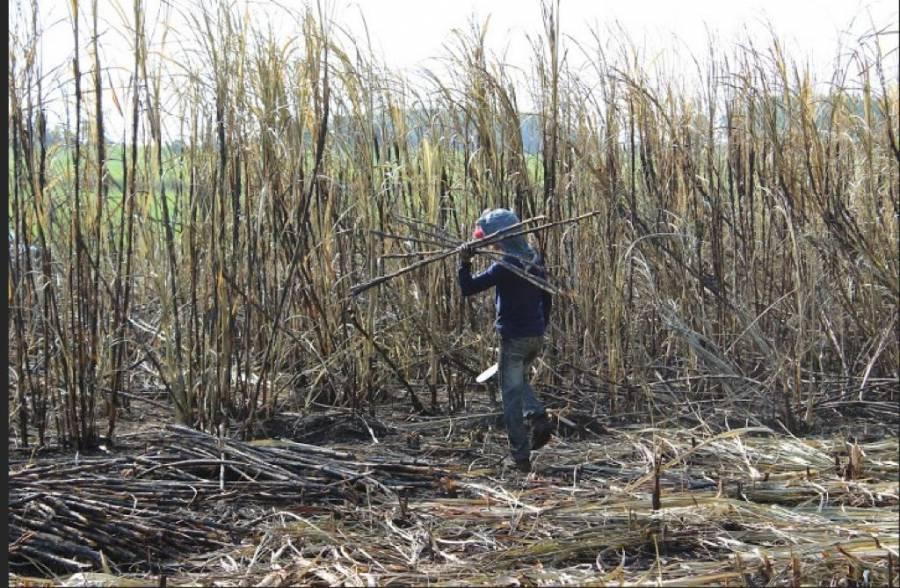 Propone World Vision erradicar trabajo infantil riesgoso
