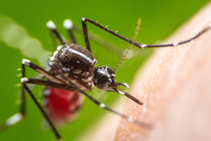 Detectan el primer caso de dengue por transmisión sexual