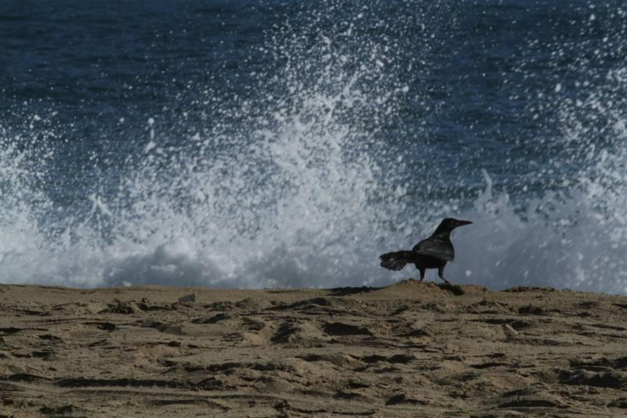 Protección Civil niega amenaza de tsunami en México