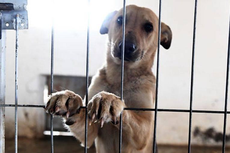 Encarcelan a maltratador animal por primera vez en CDMX