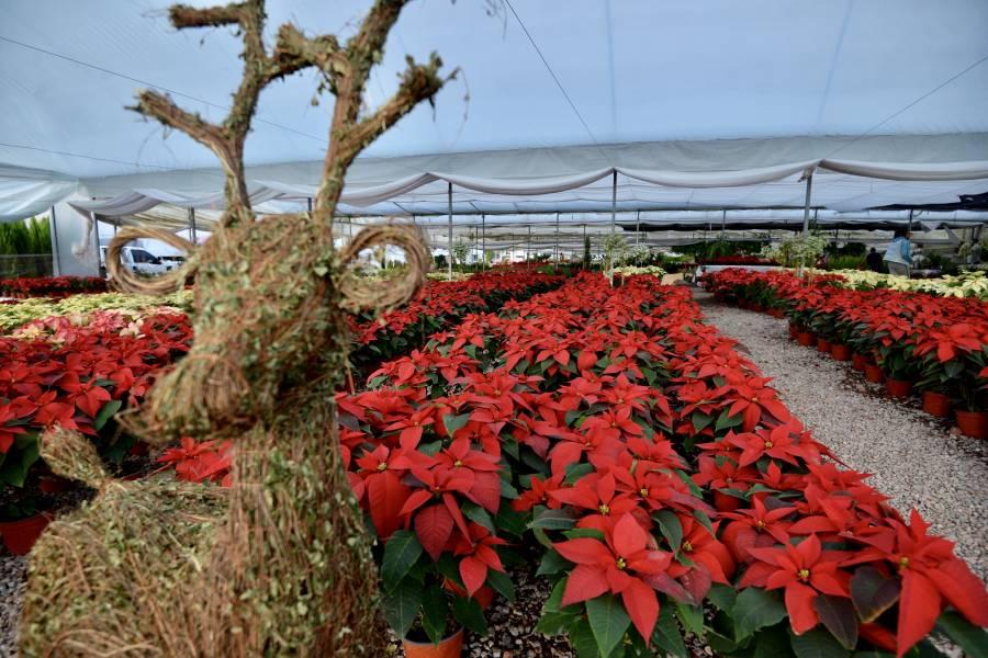La CDMX cambia el naranja por el rojo navideño