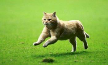 """Bayern Munich quiere fichar a """"Choricito"""", el gato que apareció en juego del Tri"""