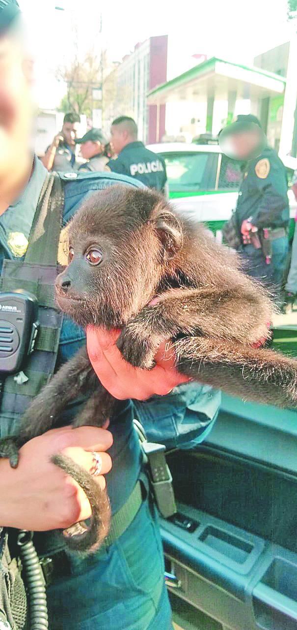 RescataSSC a mono y 2 tucanes durante retén