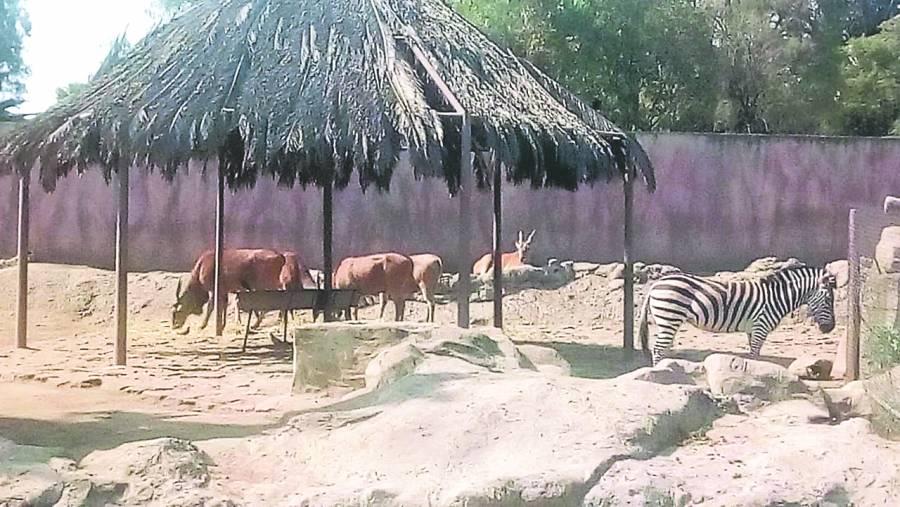 Niegan abandono en zoológico de Aragón