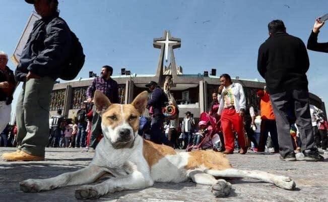 GAM cuidará a mascotas abandonadas por peregrinos