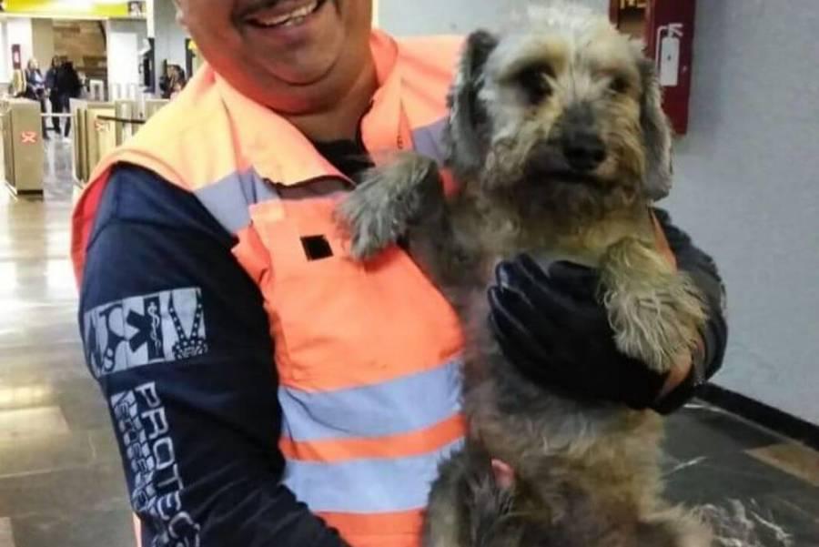 En dos años, rescatan 302 perros en Metro capitalino