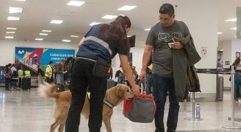 Binomios caninos frenan plagas en 3 aeropuertos