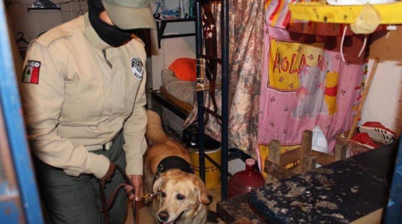 Pulque, celulares y droga, lo más decomisado en penales en 2019