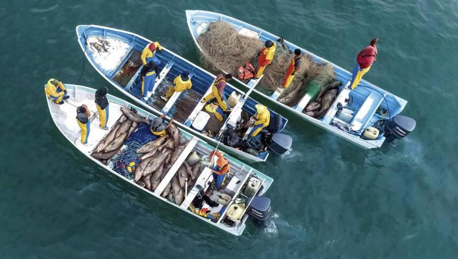 Conapesca busca regular trazabilidad de productos pesqueros y acuícolas