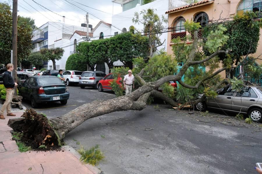 Fuertes vientos tiran al menos 20 árboles en la CDMX