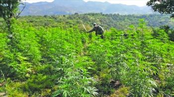 Pegan drogas sintéticas a precio de la mariguana
