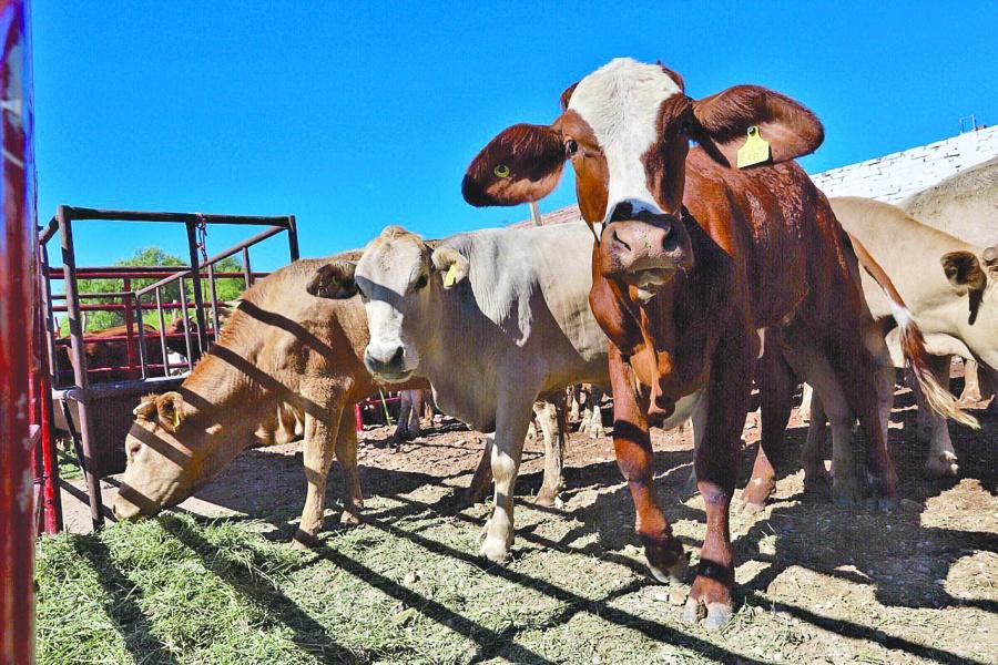 Senado busca frenar el robo de ganado en el país