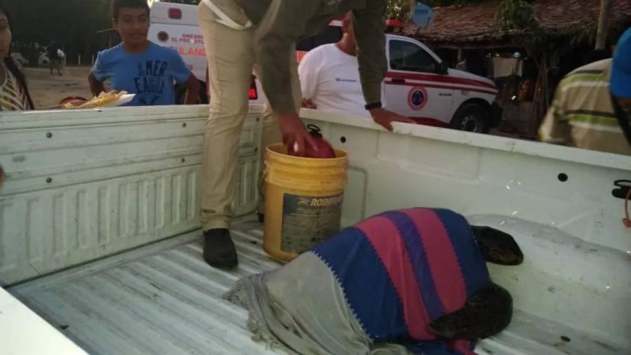 Mata la marea roja a 292 tortugas en Oaxaca