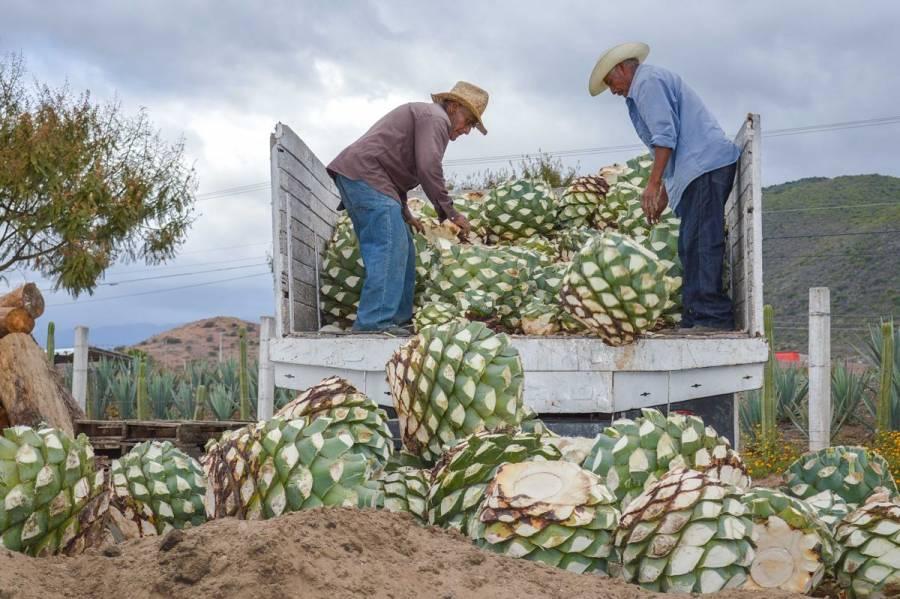 Exportaciones agroalimentarias superan un 8.6% en noviembre de 2019